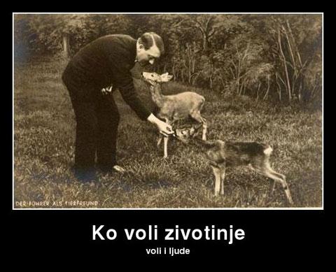 ko-voli-zivotinje
