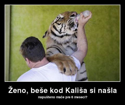 zeno-bese-kod-kalisa-