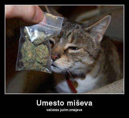 miseva