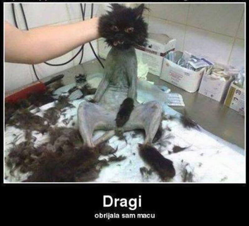 Žena obrijana maca